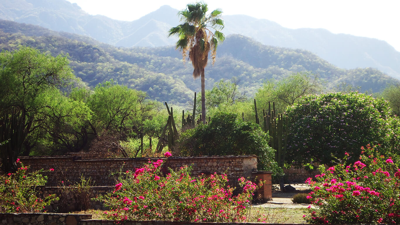 Flowers and hills on the Rancho La Colorada
