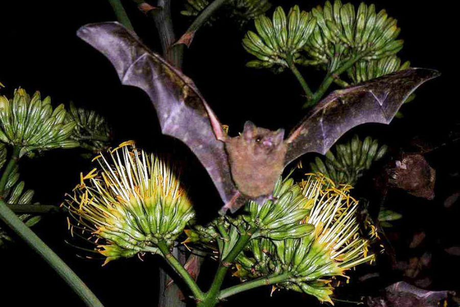 Amigo Brands Supports the Efforts of Bat Conservation International