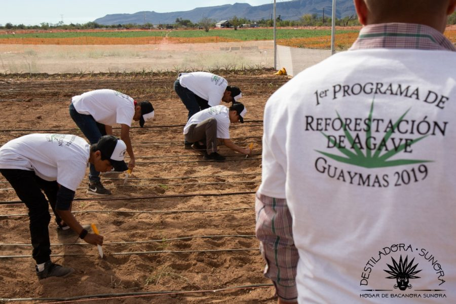 The 1st Annual Agave Reforestation Program 2019