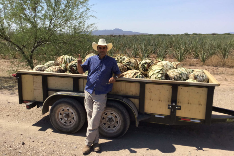 Purchasing Agave Pacifica Piñas